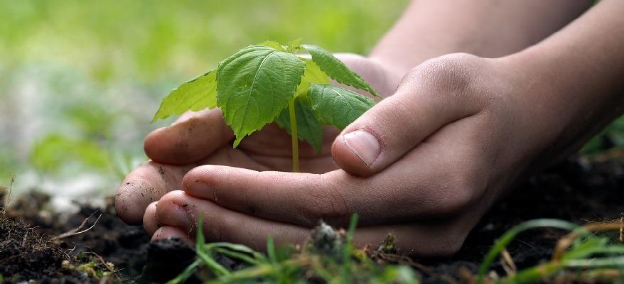 come si diventa giurista ambientale
